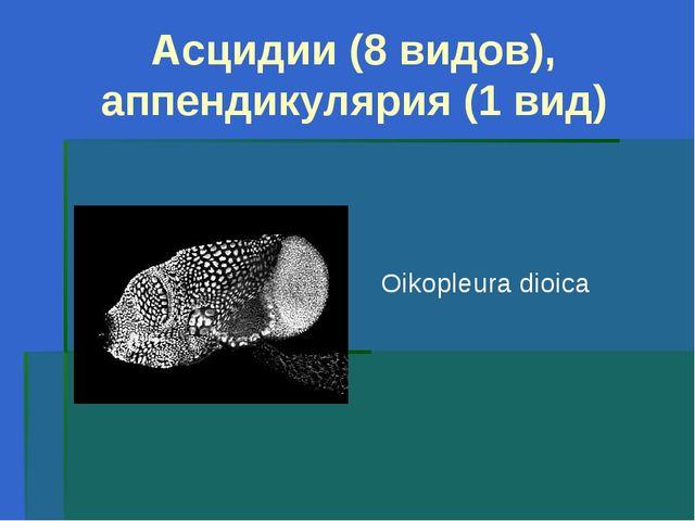 Асцидии (8 видов), аппендикулярия (1 вид) Oikopleura dioica