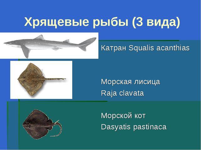 Хрящевые рыбы (3 вида) Катран Squalis acanthias Морская лисица Raja clavata М...