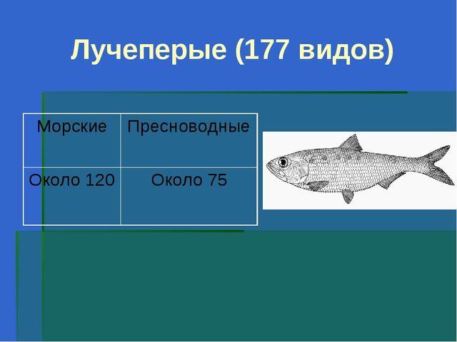 Лучеперые (177 видов)