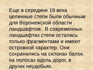 Еще в середине 19 века целинные степи были обычным для Воронежской области л