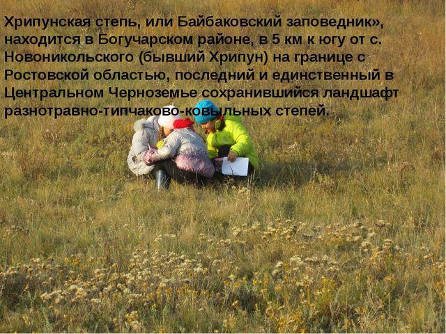 Хрипунская степь, или Байбаковский заповедник», находится в Богучарском райо...