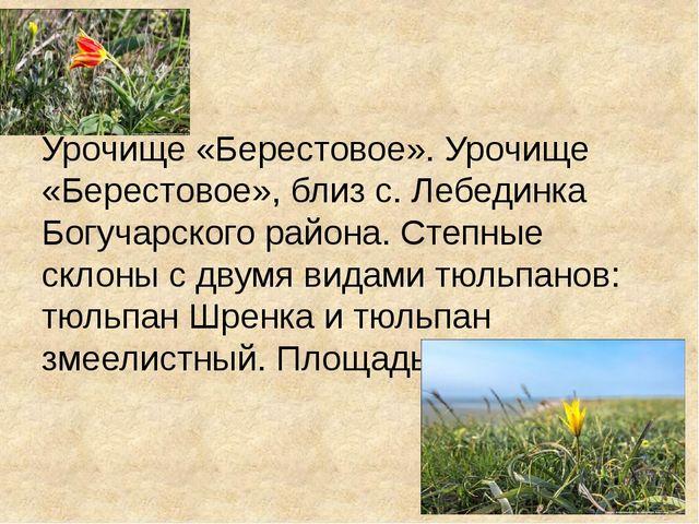 Урочище «Берестовое». Урочище «Берестовое», близ с. Лебединка Богучарского р...