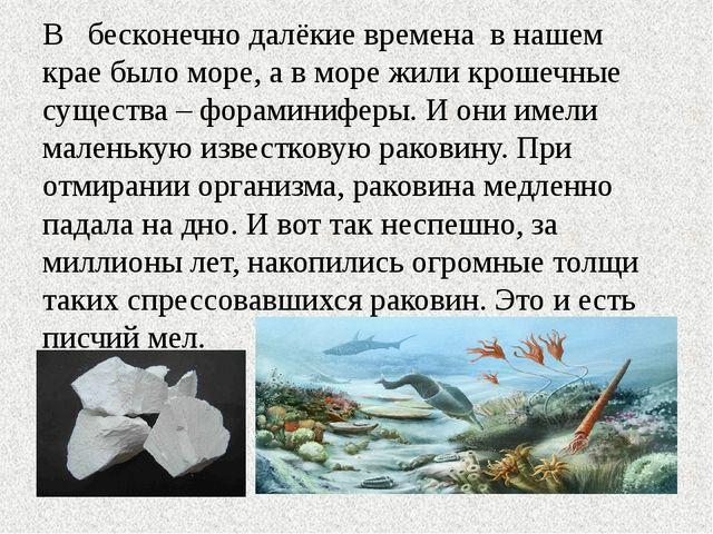 В бесконечно далёкие времена в нашем крае было море, а в море жили крошечные...