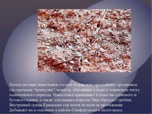 Нуммулитовые известняки состоят из раковин простейших организмов (по-гречески