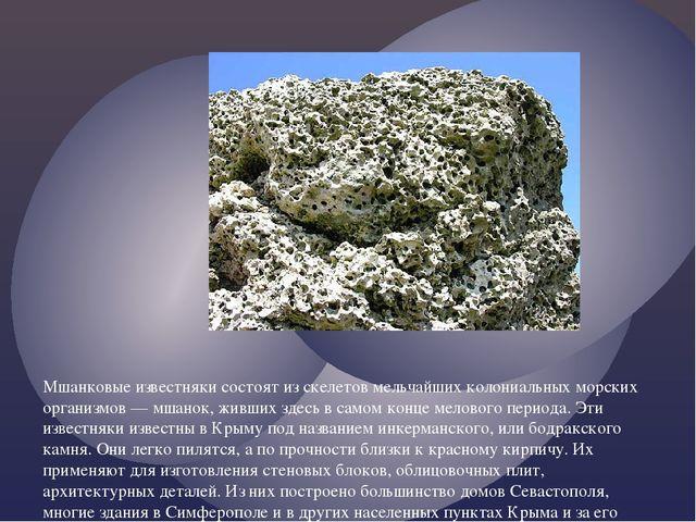 Мшанковые известняки состоят из скелетов мельчайших колониальных морских орга...