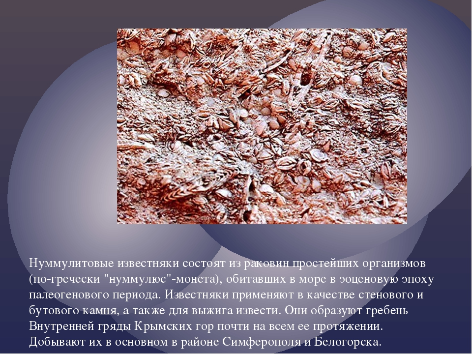 Нуммулитовые известняки состоят из раковин простейших организмов (по-гречески...