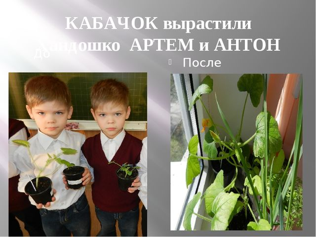КАБАЧОК вырастили Хандошко АРТЕМ и АНТОН До После