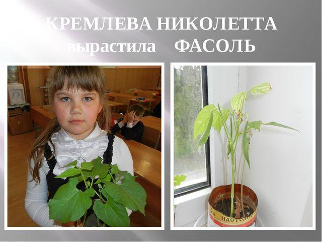 КРЕМЛЕВА НИКОЛЕТТА вырастила ФАСОЛЬ