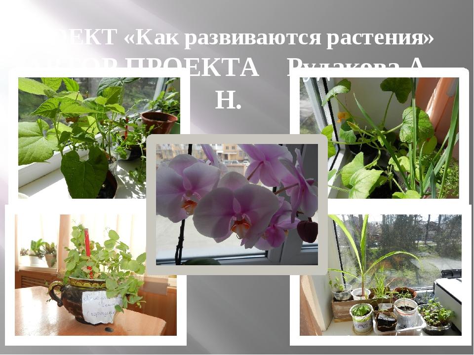 ПРОЕКТ «Как развиваются растения» АВТОР ПРОЕКТА Рудакова А. Н.