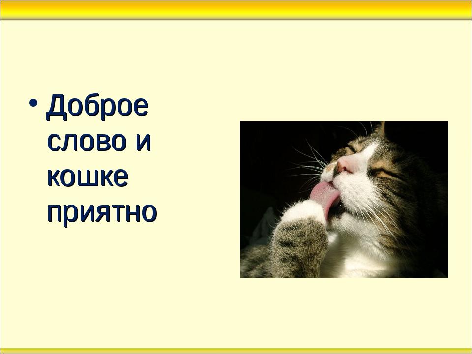 Доброе слово и кошке приятно