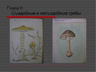 Глава II Съедобные и несъедобные грибы