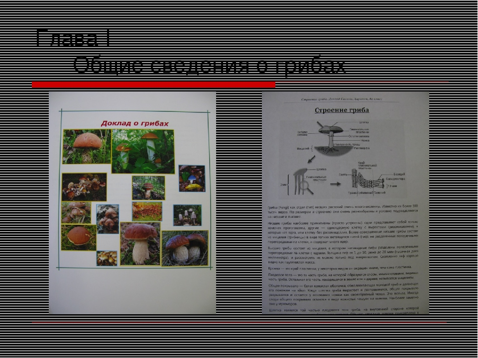 Глава I Общие сведения о грибах