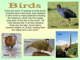 There are some 70 species of birds found nowhere else in the world. New Zeal