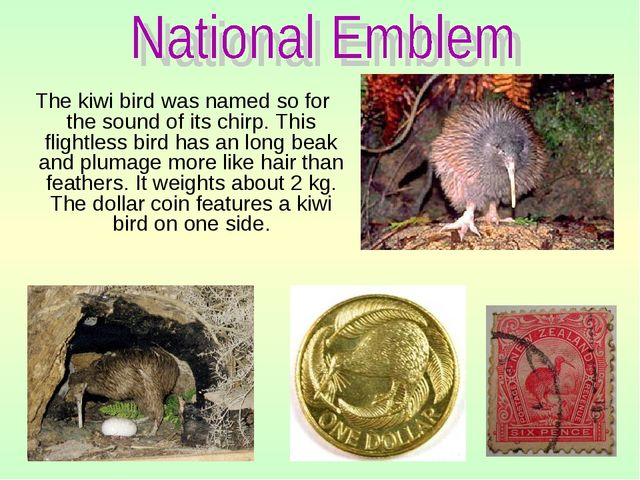 The kiwi bird was named so for the sound of its chirp. This flightless bird...