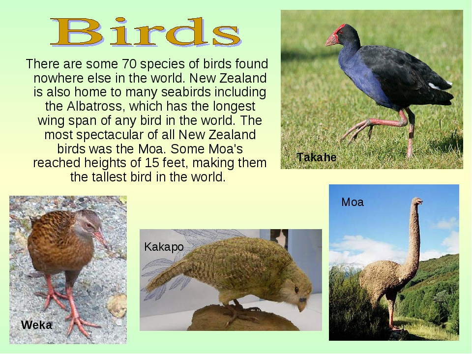 There are some 70 species of birds found nowhere else in the world. New Zeal...
