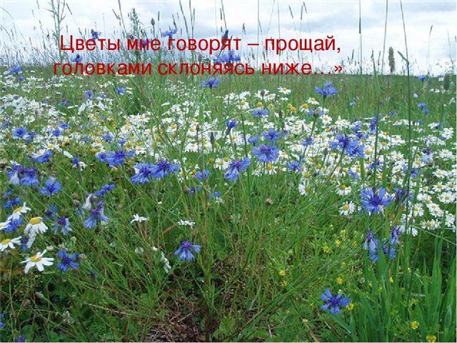 «Цветы мне говорят – прощай, головками склоняясь ниже…»