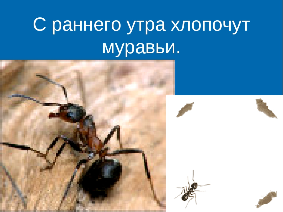 С раннего утра хлопочут муравьи.