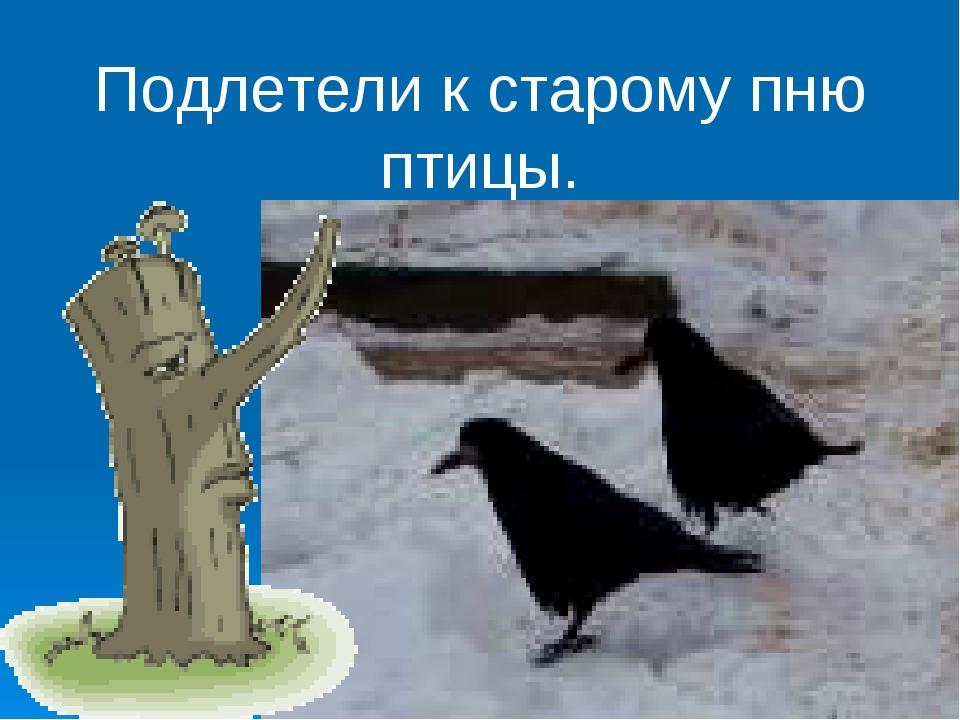 Подлетели к старому пню птицы.