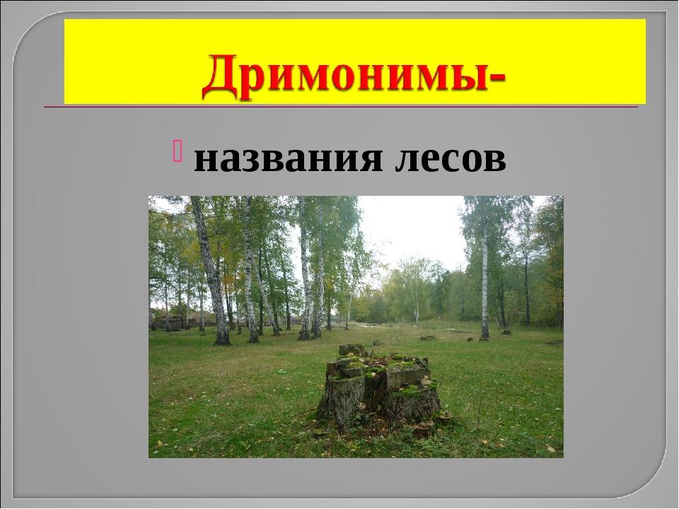 названия лесов