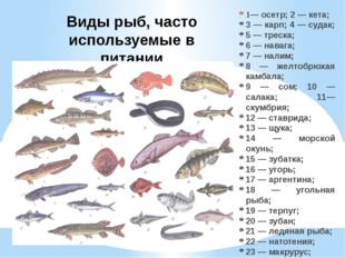 Виды рыб, часто используемые в питании 1— осетр; 2 — кета; 3 — карп; 4 — суда
