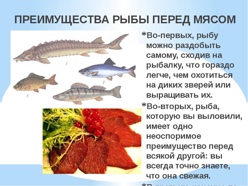 ПРЕИМУЩЕСТВА РЫБЫ ПЕРЕД МЯСОМ Во-первых, рыбу можно раздобыть самому, сходив...