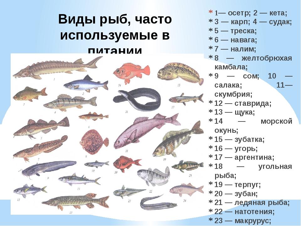 Виды рыб, часто используемые в питании 1— осетр; 2 — кета; 3 — карп; 4 — суда...