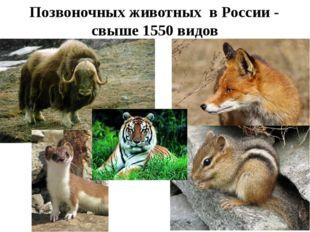 Позвоночных животных в России - свыше 1550 видов