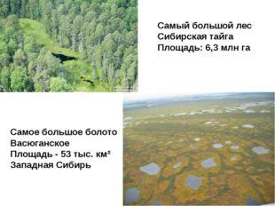 Самый большой лес Сибирская тайга Площадь:6,3 млн га Самое большое болото Ва