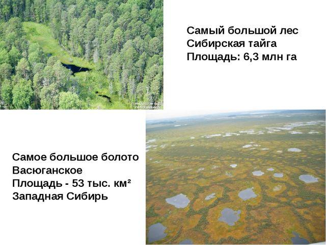 Самый большой лес Сибирская тайга Площадь:6,3 млн га Самое большое болото Ва...