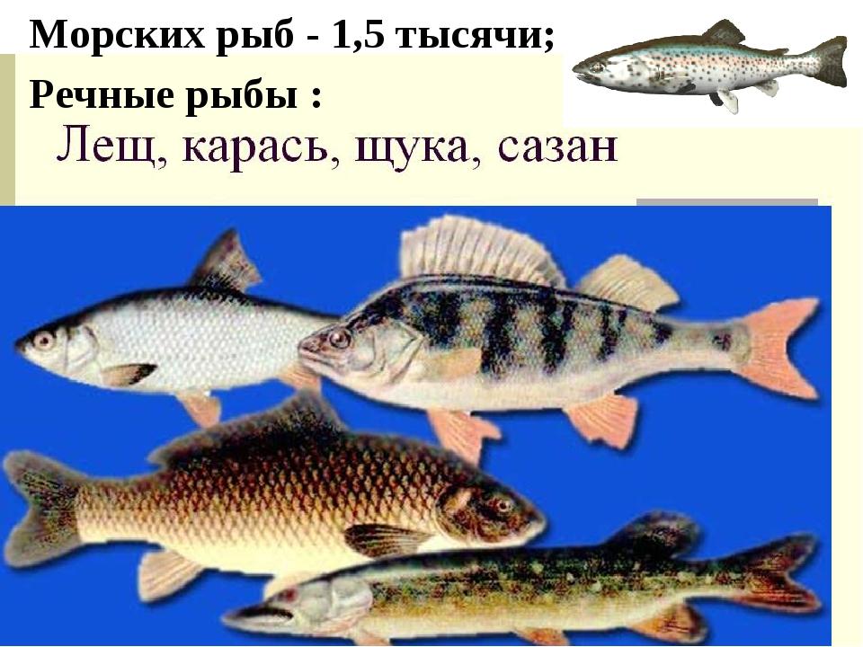 Морских рыб - 1,5 тысячи; Речные рыбы :