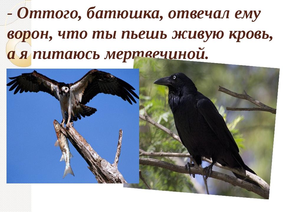 - Оттого, батюшка, отвечал ему ворон, что ты пьешь живую кровь, а я питаюсь м...