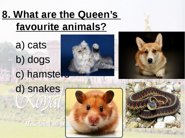 8. What are the Queen's favourite animals? a) cats b) dogs c) hamsters d) sna...