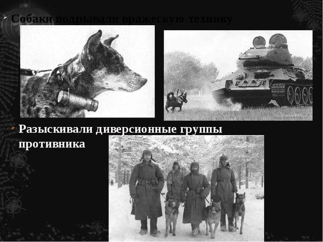 Разыскивали диверсионные группы противника Собаки подрывали вражескую технику