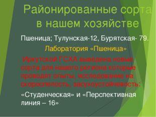 Районированные сорта в нашем хозяйстве Пшеница; Тулунская-12, Бурятская- 79.
