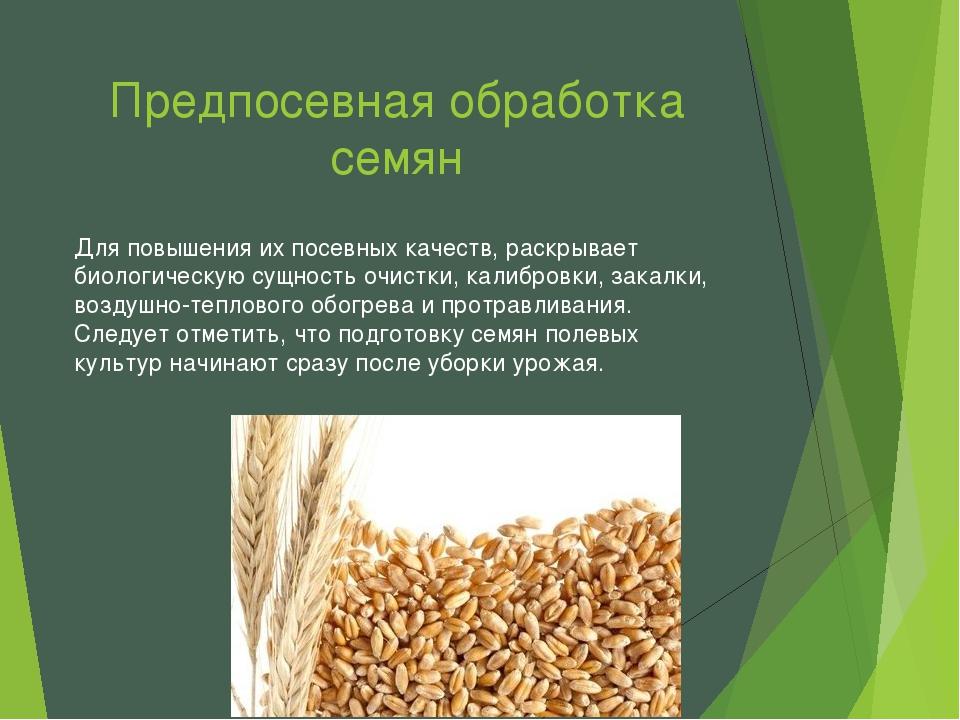 Предпосевная обработка семян Для повышения их посевных качеств, раскрывает би...