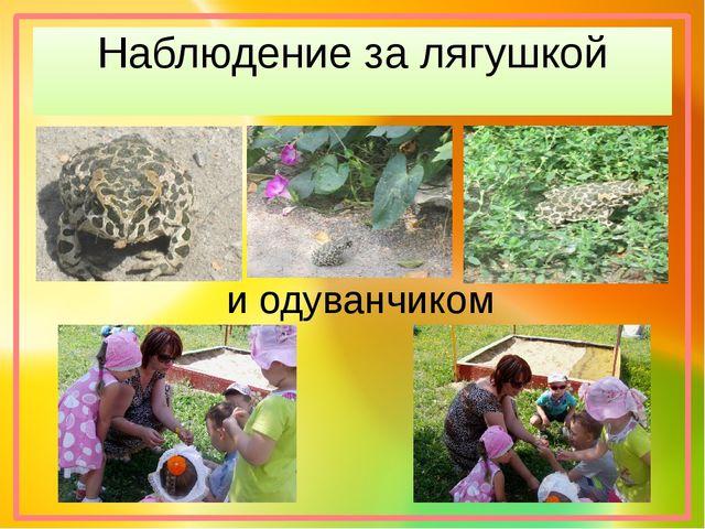 Наблюдение за лягушкой и одуванчиком
