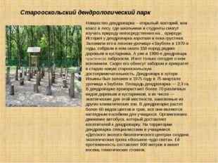 Новшество дендропарка – открытый лекторий, или класс в лесу, где школьники и