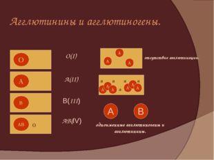 Агглютинины и агглютиногены. А А А А А А А А А a a a a a А В отсутствие агглю