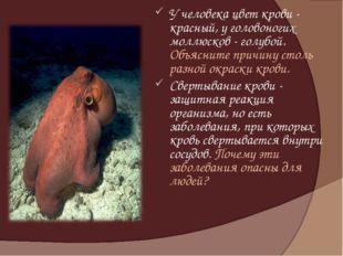 У человека цвет крови - красный, у головоногих моллюсков - голубой. Объясните