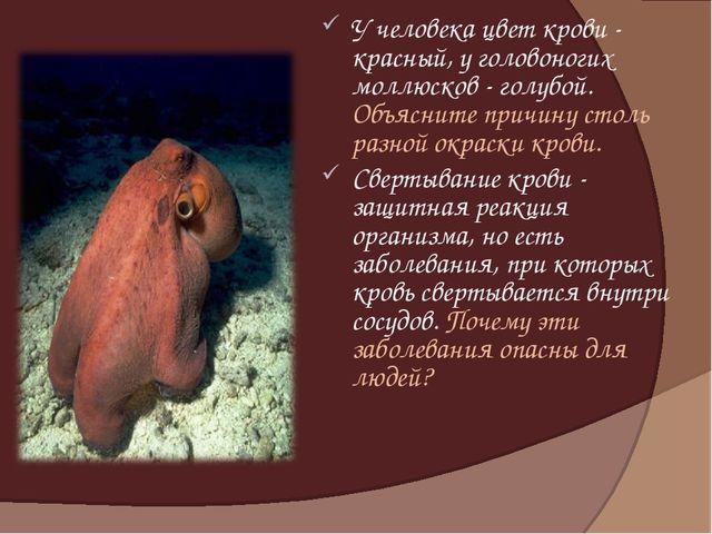 У человека цвет крови - красный, у головоногих моллюсков - голубой. Объясните...