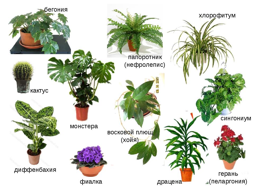 поиск названия растения по картинке спокойной ночи самому