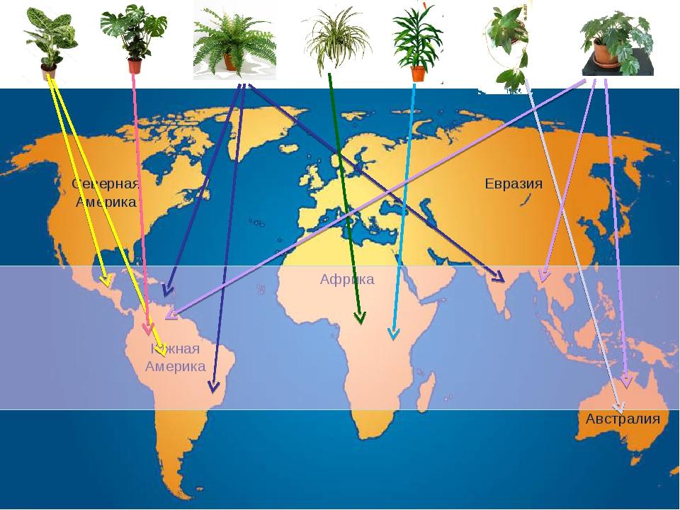Северная Америка Евразия Южная Америка Африка Австралия