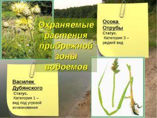 Охраняемые растения прибрежной зоны водоемов