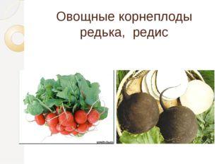 Овощные корнеплоды редька, редис