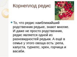 Корнеплод редис То, что редис наиближайший родственник редьке, знают многие.