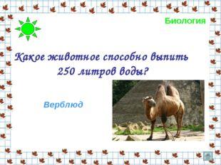 Какое животное способно выпить 250 литров воды? Верблюд Биология