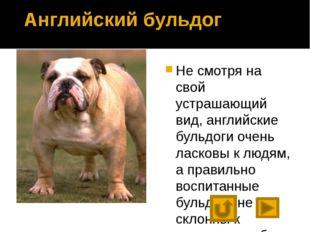 Что мы узнали о собаках? Предком собаки является волк. Люди вывели множество