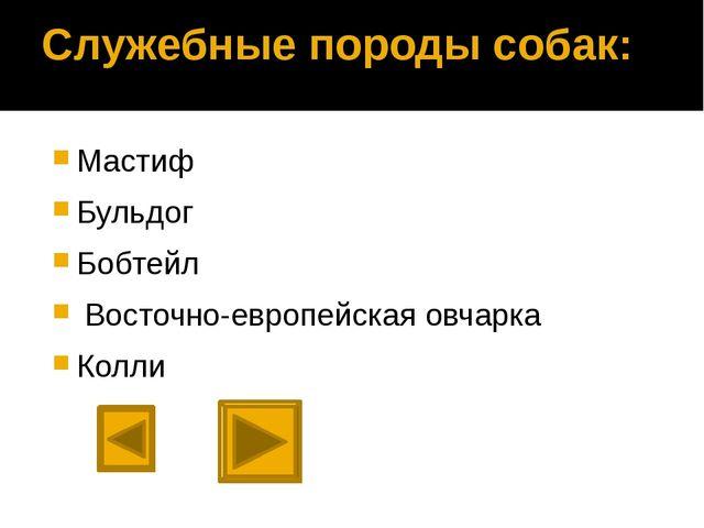 Западно-сибирская лайка Страна происхождения: Россия. использовалась изначаль...