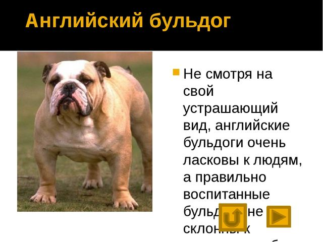 Что мы узнали о собаках? Предком собаки является волк. Люди вывели множество...