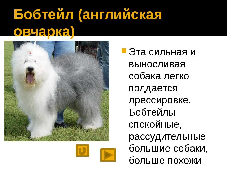 При подготовке презентации использовались материалы сайтов http://wolcha.ru/...